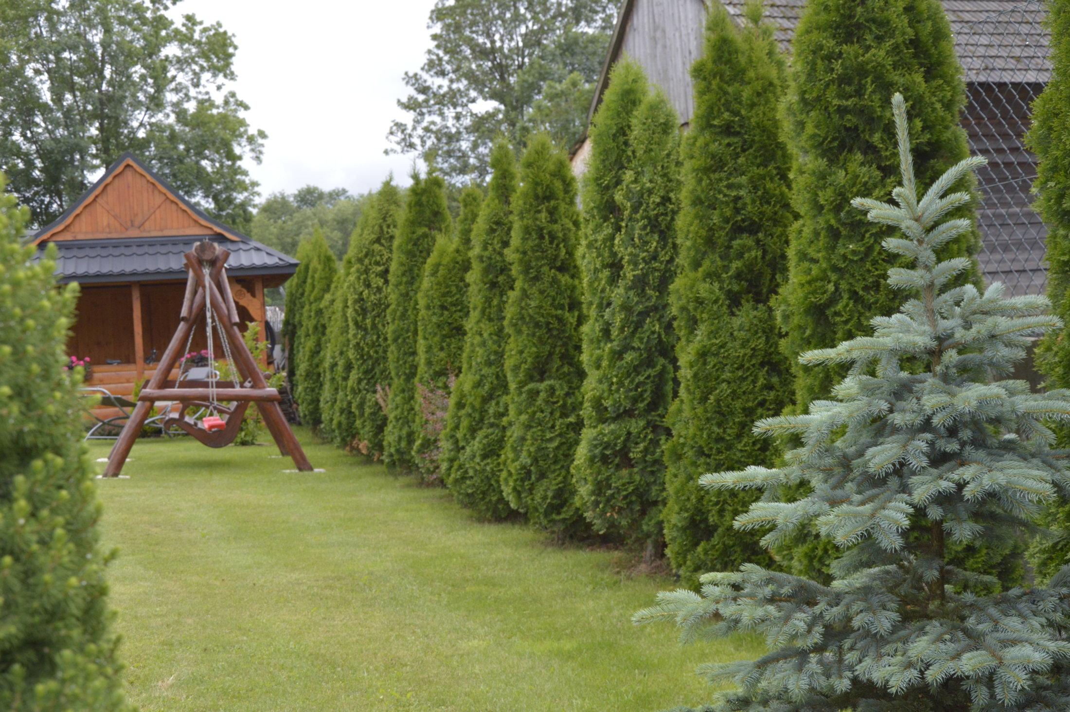 realitydesigner_pl- huśtawka z bali kompozycja iglaki ogród